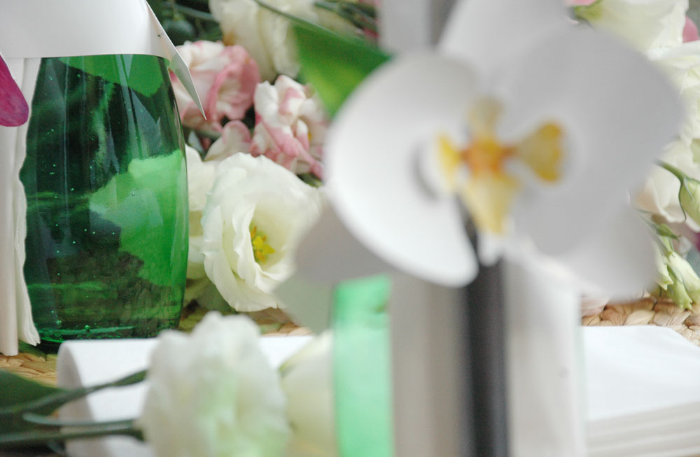 orchidea gyuru 08